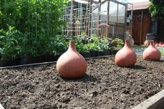 Olla (oy-yah), the most efficient irrigation system in the world