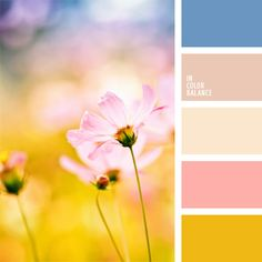 Farbpalette Nr. 66
