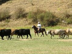 Washington State Working Dude Guest Ranch Vacations: Republic WA 99166