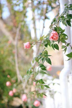 Pink Garden, Summer Garden, Party Garden, Pink Tulips, Pink Roses, Rose Arbor, Raindrops And Roses, Rose Vines, Flower Phone Wallpaper