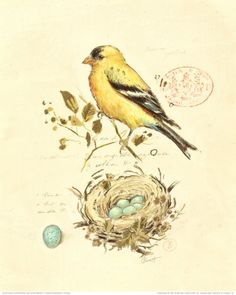 I have been wanting to find some vintage bird prints like this.