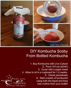 Grow a SCOBY (kombucha mother) from store kombucha and start making your own inexpensive batches of this inexpensive probiotic drink! Kombucha Drink, Kombucha Scoby, Kombucha Recipe, Probiotic Drinks, Fermentation Recipes, Homebrew Recipes, Kombucha Mother, Real Food Recipes, Healthy Recipes