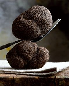 The black truffle has a symbiotic relationship with the oak tree in the Perigord region of France. Roughly 45% of the black truffle crop is found in southeastern France. via:  http://truffleharvest.com.au/ - as seen in l&l collection no. 04,  http://www.linenandlavender.net/2010/01/recipe-truffle-bruschetta.html  http://www.pinterest.com/linenlavender/ll-collection-no-04/