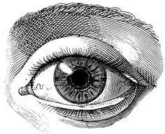 The human eye, Old medical atlas, illustration Digital Image, 62