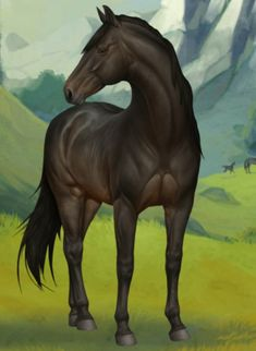 Knapstrupper kanca Horses, Animaux, Horse