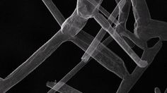 Aerographite is now officially the world's lightest solid material, beating out metallic microlattice and aerogel.