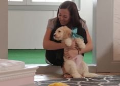 Buy Cheap Goldendoodle Puppies for Sale near me Goldendoodle Puppy For Sale, Labradoodle, Puppies For Sale, Buy Cheap, Dogs, Cute Animals, Doodles, Stuff To Buy, Doggies