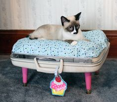 Furniture, Snuggy Luggage Suitcase Pet Bed Vintage: Old Suitcase Transforms Into A Cute Cat Bed