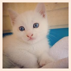 Meraviglioso gattino!!