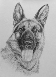 Husky, Draw, Pencil Art, Animals, Animales, Animaux, To Draw, Sketches, Animal