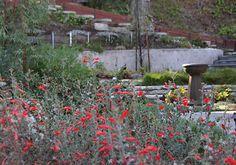 Theodore Payne Native Plant Garden Tour   Saturday & Sunday, April 14 & 15, 2012  10am-5pm