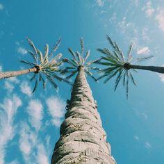 Palmeras, cielo y nubes