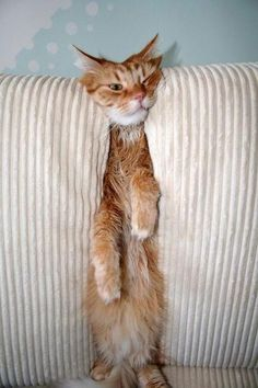Only a cat would have to get in between the cushions!