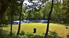 summer camp Forest Camp, Golf Courses, Camping, Plants, Summer, Campsite, Plant, Outdoor Camping, Campers
