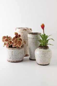 Ivory Epoch Pot, Cylinder / Anthropologie.com #fall #plant