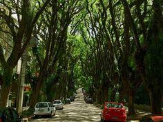"""Qual a rua mais bonita do mundo? Há quem diga que ela fica no Brasil, em Porto Alegre. A Rua Gonçalo de Carvalho é na verdade um imenso corredor de árvores protegido como patrimônio ambiental. Plantadas há mais de 70 anos por imigrantes alemães, as Tipuanas chegaram a ser ameaçadas pela construção de um shopping...<br /><a class=""""more-link"""" href=""""https://catracalivre.com.br/geral/sustentavel/indicacao/a-rua-mais-bonita-do-mundo-fica-em-porto-alegre/"""">Continue lendo »</a>"""