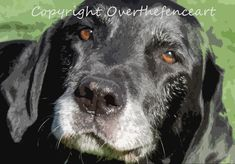 Animal Photography Fine Art Photography Black Labrador Smiles for Camera 8x10 print Photograph by overthefenceart on Etsy