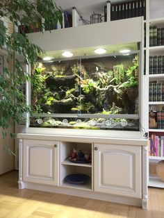 Paludarium as orchid showcase with waterfall, stream and small pools Source by hoppe_terrarien Bearded Dragon Terrarium, Bearded Dragon Cage, Bearded Dragon Habitat, Reptile Habitat, Reptile Room, Reptile Cage, Reptile Tanks, Vivarium, Paludarium