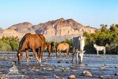 Salt River Wild Horses - Advocates by Patty Walsh