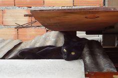Gatoca: Encontrou um gatinho na rua?