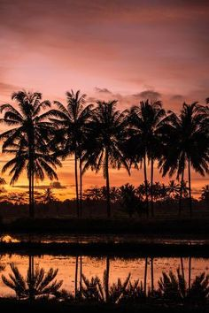 size: Photographic Print: Sunset Landscape Creating an Orange and Pink Sky with the Reflection of Palm Trees in Water by Harshvardhan Sekhsaria : Bedroom Wall Collage, Photo Wall Collage, Picture Wall, Wall Art, Aesthetic Backgrounds, Aesthetic Wallpapers, Water Poster, Sunset Pictures, Sunset Pics