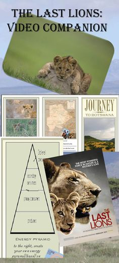 """Wonderful end of year activity! Video guide for the touching movie """"The Last Lions"""". Perfect as an engaging, topical, but fun activity for students who need a little break after standardized testing! Full movie available on YouTube! Your students will learn without effort as they create this """"travel brochure"""" that reinforces biomes, ecology, ecosystems, food pyramid, food web, predators, prey, herbivores, scavengers, etc. A perfect wrap-up for any ecology unit!"""