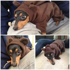 another hoodie for my doxie!