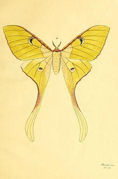 Art Print Luna Mothtesorobella On Etsy $2000  Actias Luna Delectable Small Moths In Bathroom Decorating Inspiration