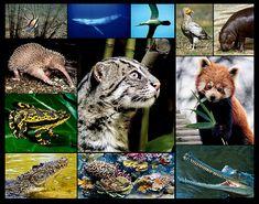 Endangered Animals for Animal park