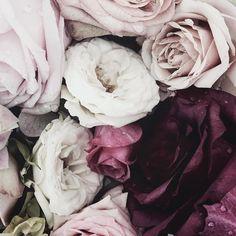 Dewy flowers - Vicki Archer //