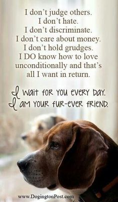 I don't judge others. I don't hate. I don't discriminate. I don't care about money. I don't hold grudges. I DO know how to love unconditionally and that's all I want in return. I WAIT FOR YOU EVERY DAY. I AM YOUR FUR-EVER FRIEND.
