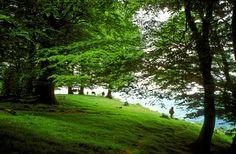 Bosques mágicos que te esperan en #Navarra. ¡No te los pierdas!
