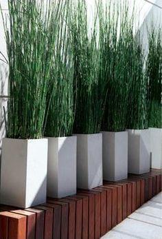Alignement de pots identiques, composition géométrique simple, verticalité : beau et efficace...