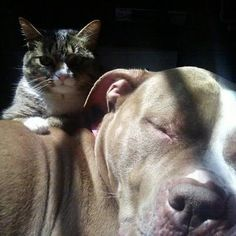 Ya, and people call PitBulls vicious. Tell those people to go and ask that cat and get his/her say.