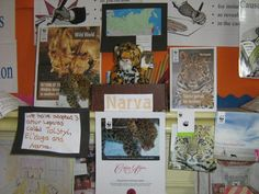 Dear stuart,     Our Amur leopard Update pack arrived yesterday, thank you so much! I've attached a picture of our WWF Infomation area to show how much care and interest the children have shown. Thanks again,   Primary 5/6,  Liff Primary School, Angus
