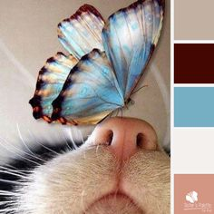 Curious butterfly palette