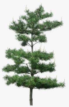 51 Ideas For Tree Photoshop Png
