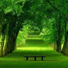 Tranquility bench forest greenery meditation  www.LastinLightReiki.com  www.Facebook.com/LastingLightYogaandReiki  P - #LastingLight  T - #YogaReikiUp