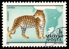 stamp hungary 1981 Panthera pardus Leopard   100. Geburtstag…   Flickr