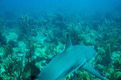 Crown Jewel of Cuba's Coral Reefs…