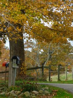 Country Mail | Living the Country Life