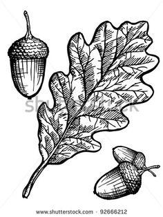 Oak Leaf And Acorn Stock Vector Illustration 92666212 : Shutterstock