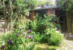Jardin en ville avec des iris en fleurs. #jardin #petitjardin #smallgarden #citygarden #backyard #iris #fleur #purpleflower #amenagement Chien Bull Terrier, Green Life, Nature, Violet, Deco, Mini, Garden, Wood Gardens, Small Gardens