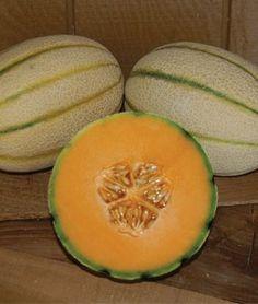 Melon Tuscan, Bella Tuscana Hybrid | Garden Seeds and Plants