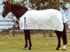 White Fly Sheets Are Best