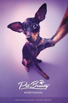 Canine Selfie Ads - This Pet Beauty Campaign Features Dogs Taking Self-Captures #instadog