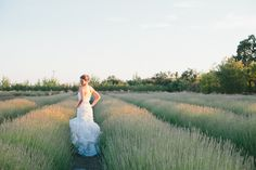 Fields of lavender // Photography By http://onelove-photo.com, Floral and Wedding Design By http://bearflagfarm.com