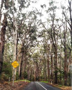 The road often traveled. #NoFilterNeeded #AireysInlet #PortCampbell #rain #igers #green #RoadTrip #Melbourne #naturallight #ExploreMelbourne #nature #VisitVictoria #ExploreEverything #VisitMelbourne #igers_Vic #NoFilter #australiagram #australiagram_vic #Australia #Victoria #wanderlust #travelgram #TravelAustralia #NeverStopExploring #travel #iPhone #latergram #Anglesea #Torquay by kimferns http://ift.tt/1KosRIg