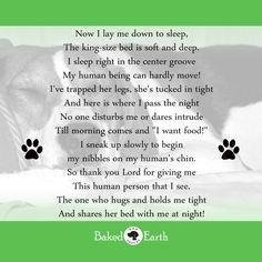 A dogs bedtime prayer