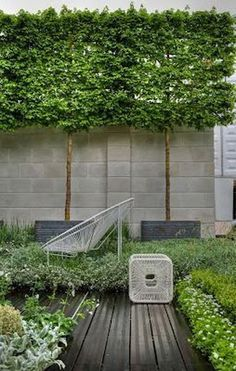 Pleached trees in grey planters. Dark grey decking edged with low planting Pleached trees in grey planters. Dark grey decking edged with low planting Back Gardens, Small Gardens, Outdoor Gardens, Hedges, Garden Screening, Screening Ideas, Contemporary Garden, Outdoor Landscaping, Landscaping Ideas